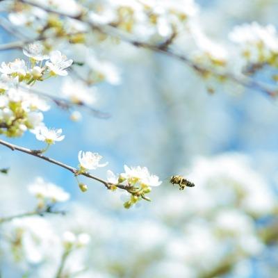Het voorjaar komt er weer aan!